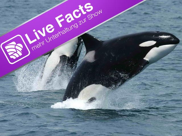 Orcas, Grauwale und Live-Facts